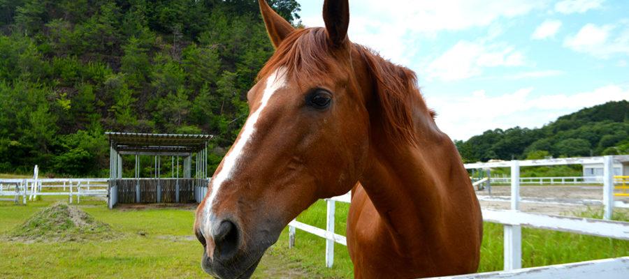 犬山乗馬クラブトップ画像04